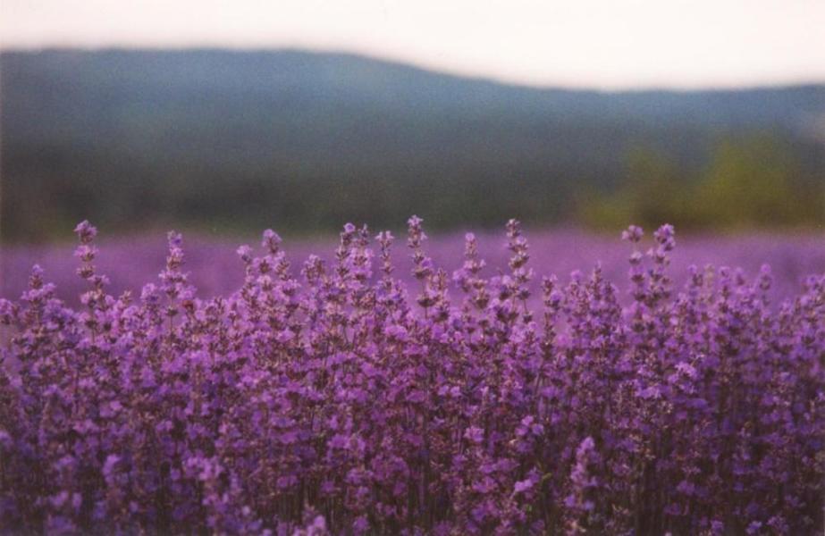 Refan Naturkosmetik Duft Lavendel