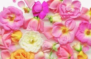 Refan Naturkosmetik Duft Bulgarische Rose