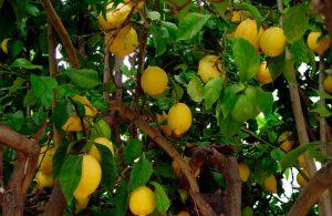 Refan Naturkosmetik Duft Zitrone